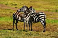 释放的原野:魅力肯尼亚风景图片(20张)