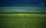 西藏阿里图片(14张)