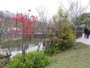 商丘南湖公园风景图片(13张)