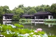 杭州西湖的荷花图片(19张)