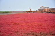 辽宁盘锦红海滩风景图片(12张)
