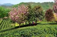 陕西平利风景图片(8张)