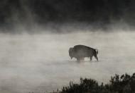 黄石公园动物篇图片(16张)