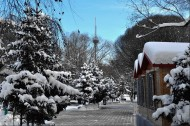 新疆红山雪景图片(16张)