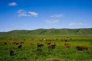 乌兰木统草原放牧图片(19张)