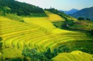 广西龙脊梯田风景图片(15张)