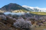西藏林芝桃花风景图片(13张)
