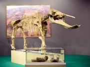 甘肃和政古动物化石图片(12张)