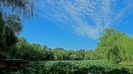 北京紫竹院公园风景图片(12张)