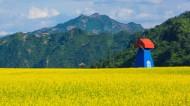 吉林集安油菜花风景图片(7张)