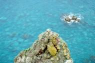 日本积丹半岛的图片(11张)