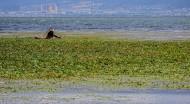 云南洱海风景图片(8张)