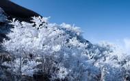 黄山雾凇图片(14张)