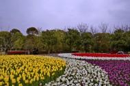 上海鲜花港风景图片(10张)