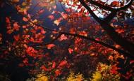 广东云髻山红叶风景图片(12张)