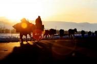 新疆那拉提草原图片(20张)