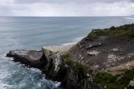 新西兰鸟岛风景图片(9张)