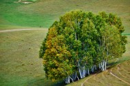 内蒙古乌兰布统草原风景图片(6张)