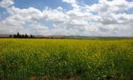 内蒙古乌兰察布辉腾锡勒风景图片(21张)