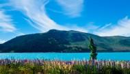 新西兰特卡波湖风景图片(17张)