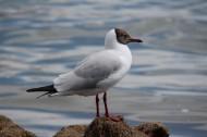 青海湖鸟岛风景图片(16张)