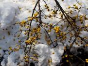 扬州雪景图片(15张)