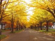 日本札幌美景图片(12张)