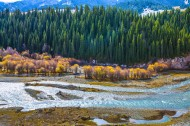 新疆巩乃斯的秋色风景图片(13张)
