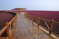 辽宁盘锦红海滩风景图片(9张)