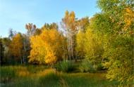 新疆布尔津秋桦风景图片(13张)