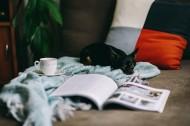 沙发上的杂志和小狗的图片(9张)
