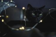 黑色的猫咪图片(10张)