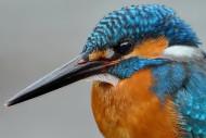 翠鸟图片(15张)