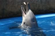 可爱的海豚图片(11张)