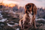 可爱的小狗图片(12张)