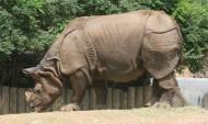 体型庞大的犀牛图片(11张)