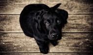睁大双眼的小狗图片(18张)
