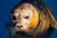 海豹图片(10张)