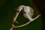 爬树枝的蜗牛图片(7张)