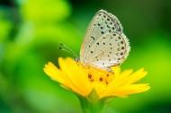 清新自然的蝴蝶图片(24张)