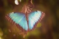 五彩缤纷的蝴蝶图片(14张)
