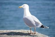 可爱的海鸥图片(16张)