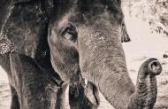 大象局部图片(9张)