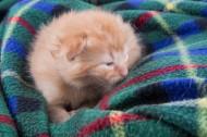 可爱的小猫咪图片(13张)