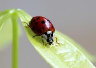 瓢虫图片(6张)