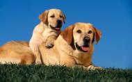 两只狗狗的亲密合照图片(16张)