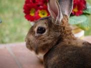萌萌的灰兔图片(15张)