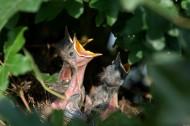 饥饿的幼鸟图片(10张)