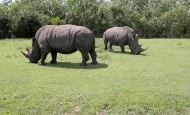 犀牛图片(8张)