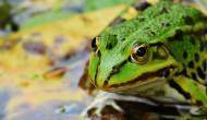 青蛙高清图片(15张)